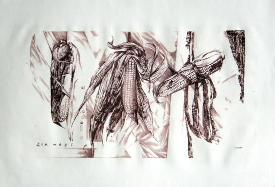 Zea-mays.-litografiya35h50sm